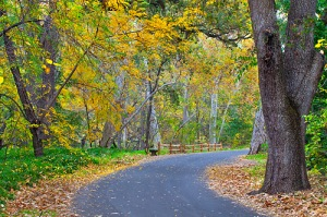 Photo of Bidwell Park in autumn by Anthony Dunn