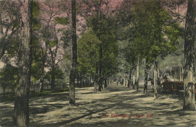 esplanade postcard
