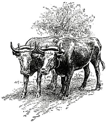 ox-team